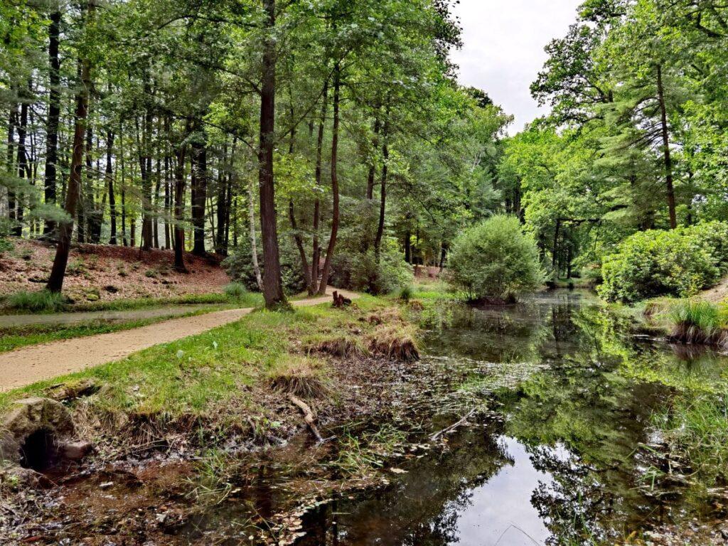 Der Kromlauer Park ist ein weitgehend naturbelassener Park in Sachsen