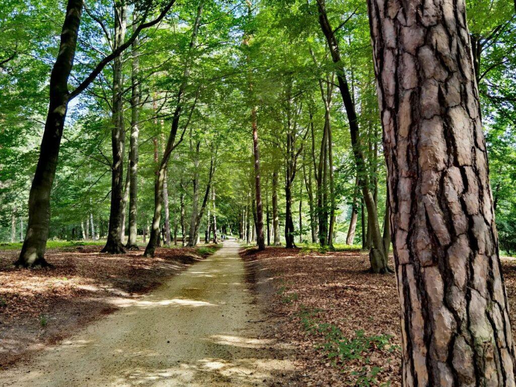 Genussvoll durch den Kromlauer Park spazieren